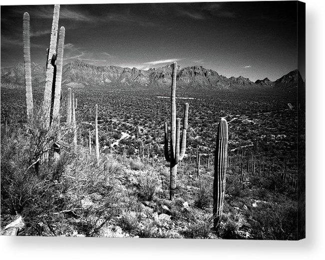 Saguaro Cactus Acrylic Print featuring the photograph Arizona, Tucson, Saguaro Np, Brown by James Denk