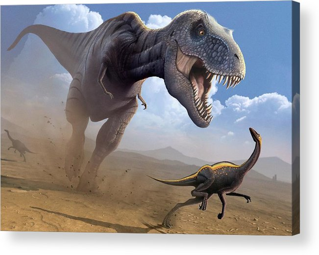 White Background Acrylic Print featuring the digital art Artwork Of A Tyrannosaurus Rex Hunting by Science Photo Library - Mark Garlick