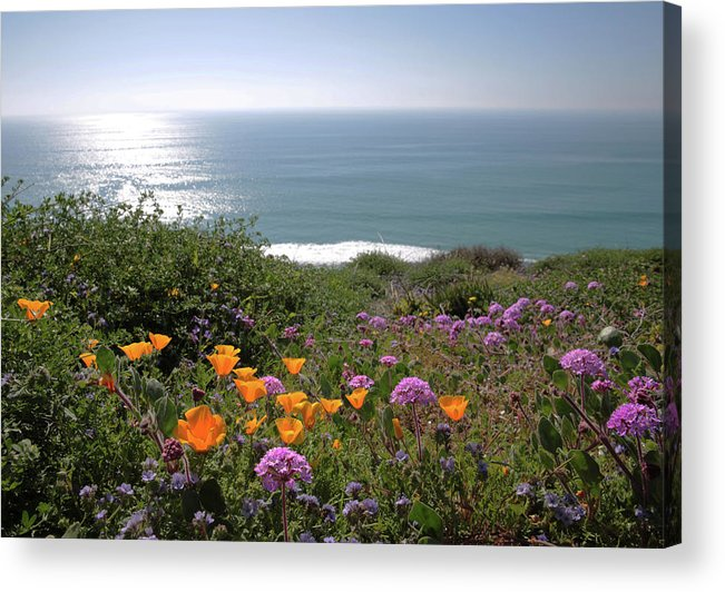 Wildflowers Acrylic Print featuring the photograph Coastal Bouquet by Robin Street-Morris