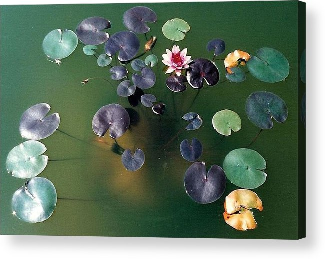 1980-1989 Acrylic Print featuring the photograph Lillypad by Margherita Wohletz