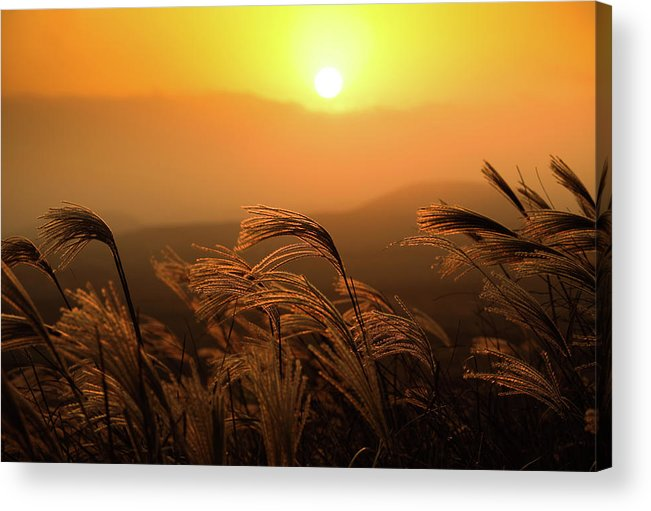 Tranquility Acrylic Print featuring the photograph Sunset, Reeds And Wind by Douglas Macdonald