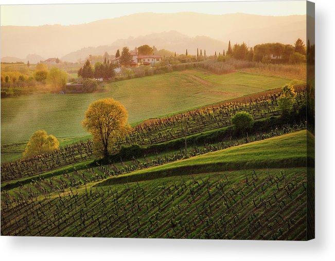Scenics Acrylic Print featuring the photograph Tuscan Vinyards by John And Tina Reid