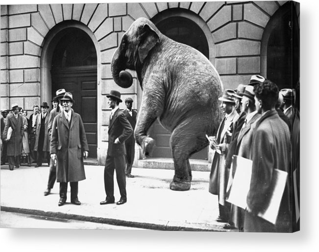 1930-1939 Acrylic Print featuring the photograph Victory, The G.o.p. Elephant, Stands In by New York Daily News Archive