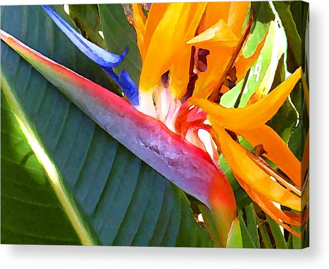 Hawaii Greeting Cards Acrylic Print featuring the photograph Bird of Paradise by James Temple