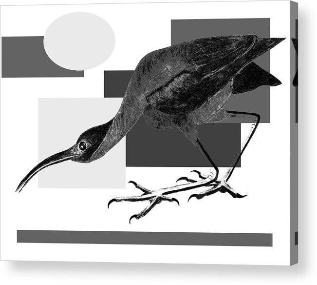 Bird Acrylic Print featuring the painting Shadow Dancing by Tess M J Iroldi