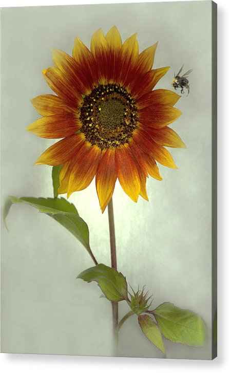 Sunflower Acrylic Print featuring the mixed media Sunflower And Bee by Sandi F Hutchins