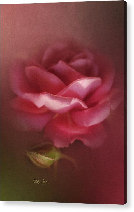Floral Roses Nature Digital Acrylic Print featuring the painting My Ordinary Rose by Carolyn Staut
