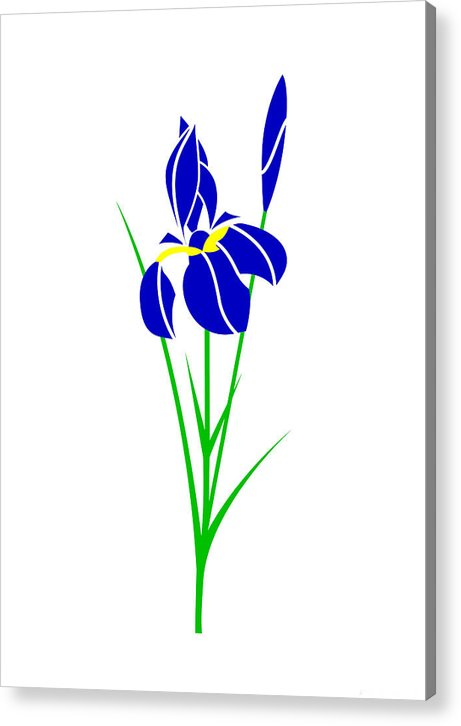 Iris Acrylic Print featuring the digital art Iris by Asbjorn Lonvig