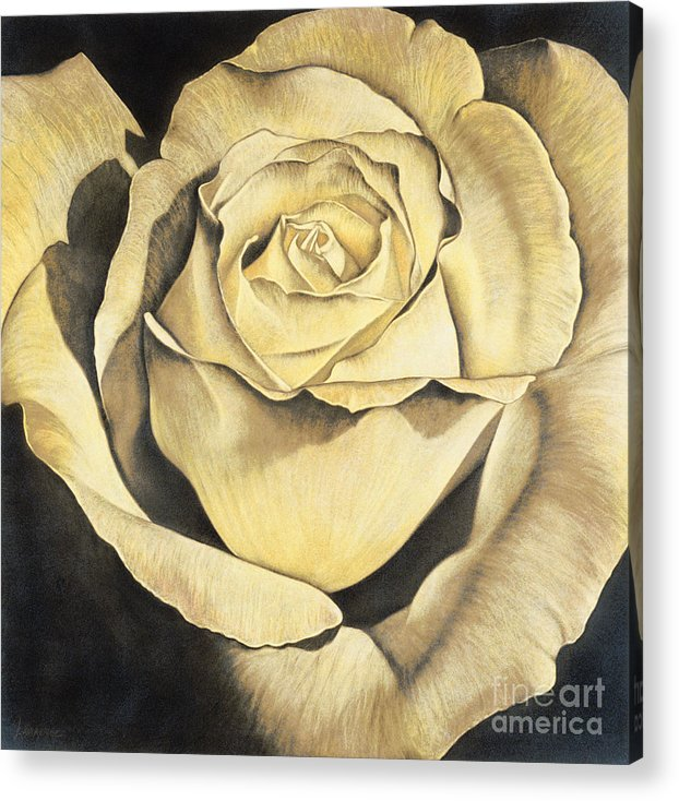 Lawrence Supino Acrylic Print featuring the painting Yellow Rose by Lawrence Supino