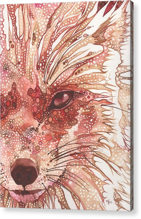 Fox Acrylic Print featuring the painting Fox by Tamara Phillips