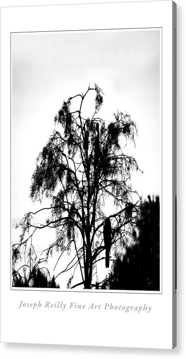 Acrylic Print featuring the photograph Winter Sky Wood Storks by Joseph Reilly