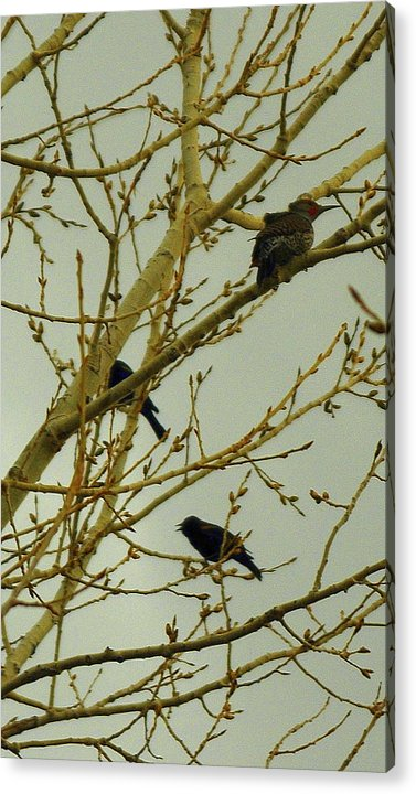 Woodpecker Acrylic Print featuring the photograph Woodpecker by Patrick Short