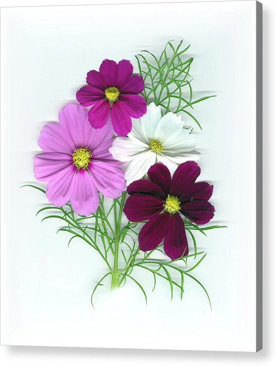 Cosmos Acrylic Print featuring the mixed media Cosmos Bouquet by Sandi F Hutchins
