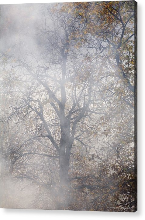 Autumn Acrylic Print featuring the photograph Autumn4 by Luigi Barbano BARBANO LLC