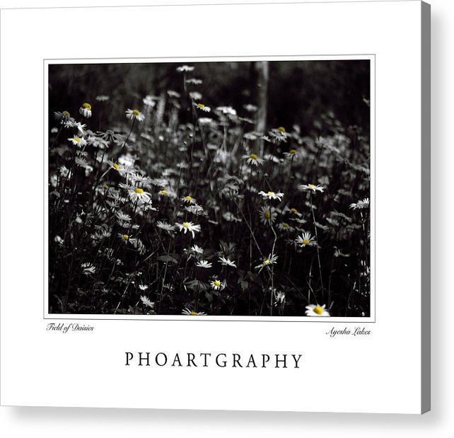Flowers Acrylic Print featuring the photograph Field Of Daisies by Ayesha Lakes