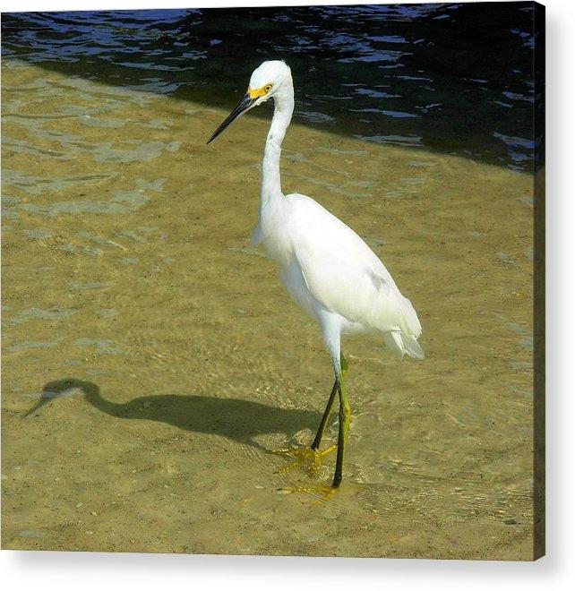 Nature Acrylic Print featuring the photograph Beach Bird by Amanda Vouglas