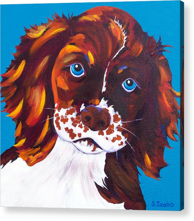 Cocker Spaniel Acrylic Print featuring the painting Murphy by Susan Szabo