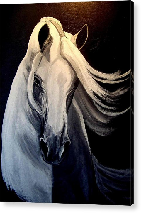 Euine Acrylic Print featuring the painting Andalusian Stallion by Glenda Smith
