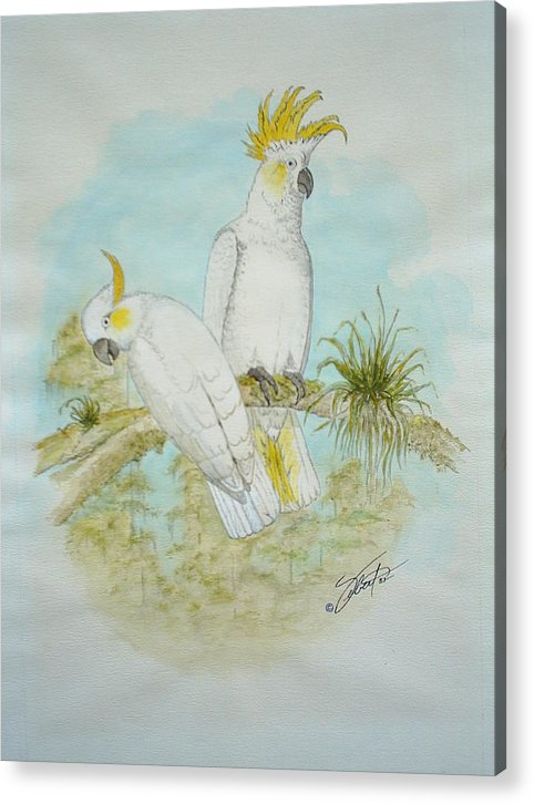 Birds Acrylic Print featuring the painting Cockatoos by Dennis Vebert