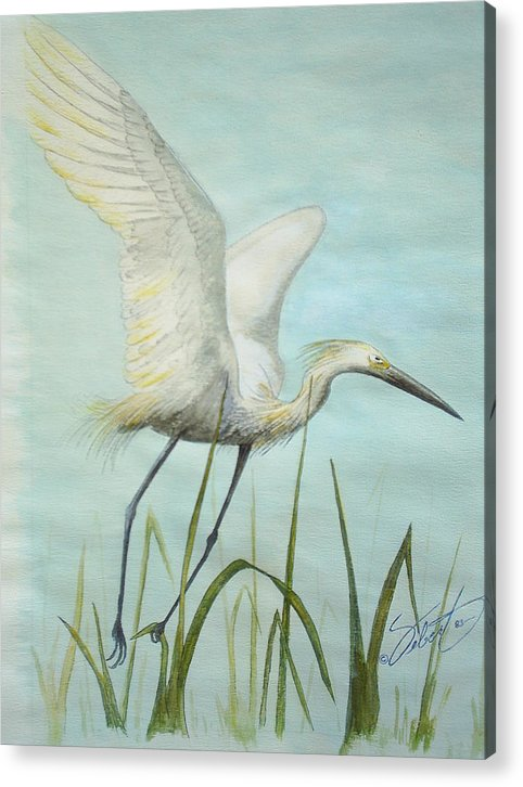 Bird Acrylic Print featuring the painting Egret In Flight by Dennis Vebert