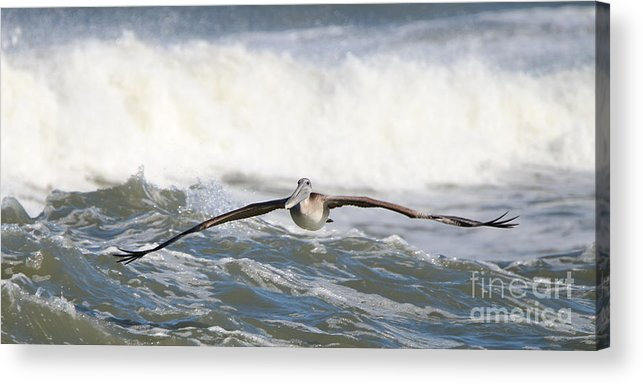 Pelican Acrylic Print featuring the photograph Pelican 4057 by Jack Schultz