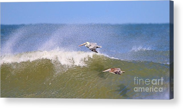 Pelicans Acrylic Print featuring the photograph Pelicans 3868 by Jack Schultz