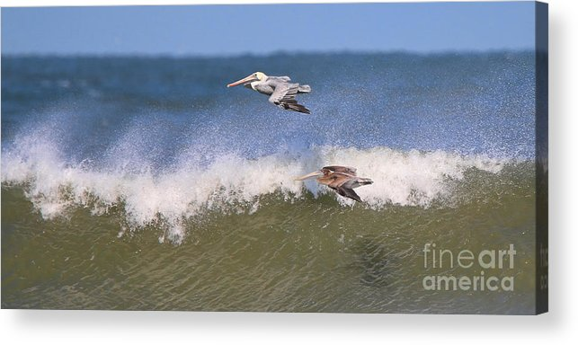 Pelicans Acrylic Print featuring the photograph Pelicans 3870 by Jack Schultz
