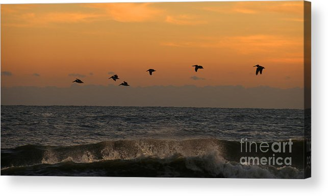 Pelicans Acrylic Print featuring the photograph Pelicans At Sunrise 4674 by Jack Schultz