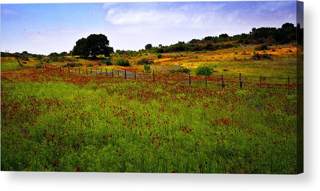 Texas Acrylic Print featuring the photograph Roadside Flowers by Tamyra Ayles