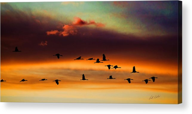 Bill Kesler Photography Acrylic Print featuring the photograph Sandhill Cranes Take The Sunset Flight by Bill Kesler