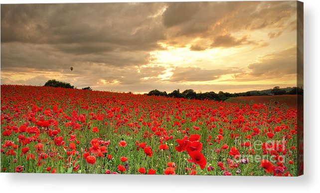 Landscape Acrylic Print featuring the photograph Hot Air Balloon Over Poppy Field by Verity Milligan