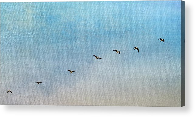 Geese Acrylic Print featuring the photograph Seven by Rebecca Cozart