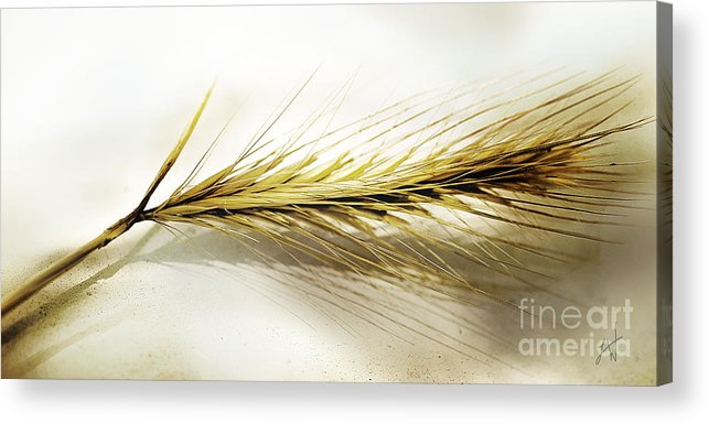 Ocher Acrylic Print featuring the photograph Summer In Ocher by Artist and Photographer Laura Wrede
