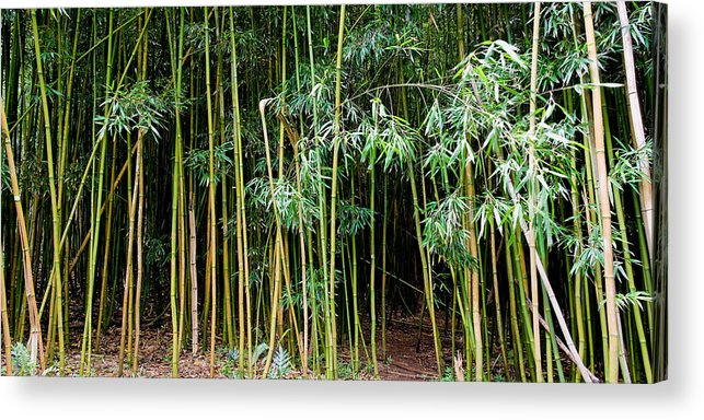 Bamboo Wind Chimes Acrylic Print featuring the photograph Bamboo Wind Chimes Waimoku Falls Trail Hana Maui Hawaii by Michael Bessler
