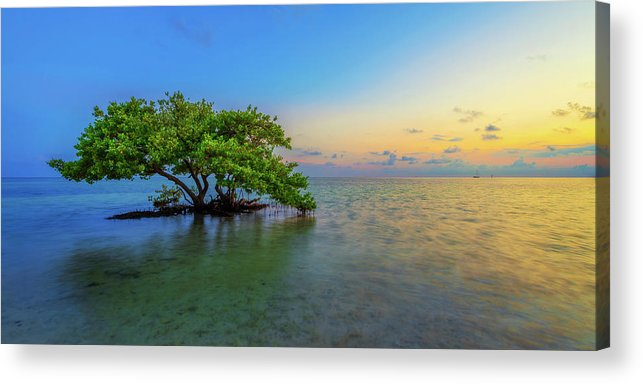 Mangrove Acrylic Print featuring the photograph Isolation by Chad Dutson