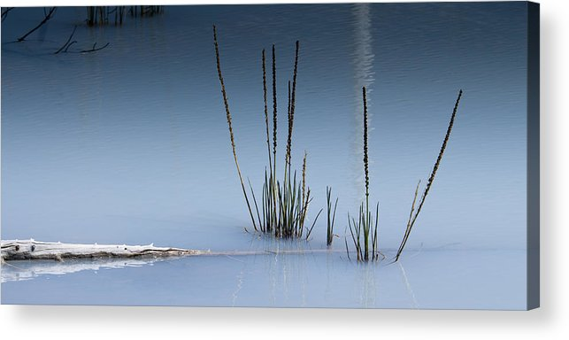 Chad Davis Acrylic Print featuring the photograph The Vigor Of Life by Chad Davis