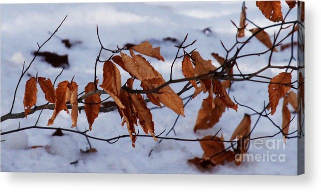 Autumn Acrylic Print featuring the photograph With Autumn's Passing by Linda Shafer