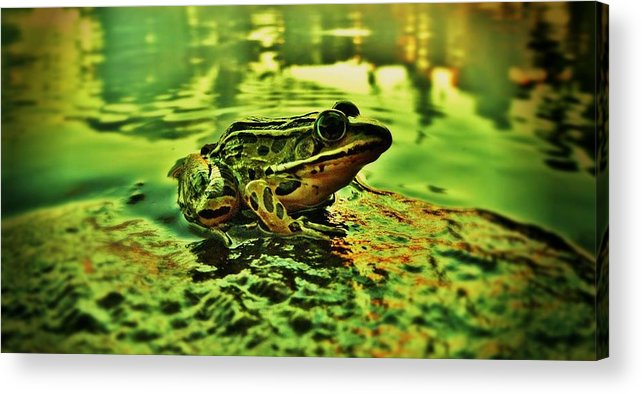 Northern Leopard Frog Acrylic Print featuring the photograph Northern Leopard Frog by Sarah Pemberton