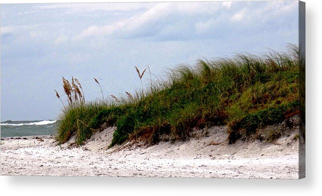 Beach Acrylic Print featuring the photograph Wind In The Seagrass by Ian MacDonald