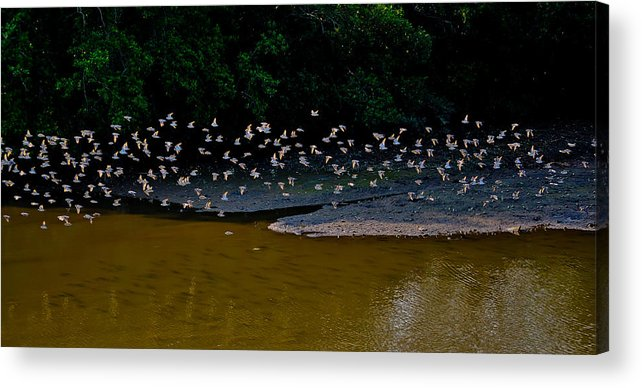 Birds Acrylic Print featuring the photograph Follow Me by Chua ChinLeng