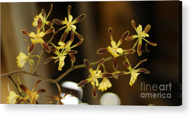 Orchid Acrylic Print featuring the photograph Orchids by Nancy Greenland