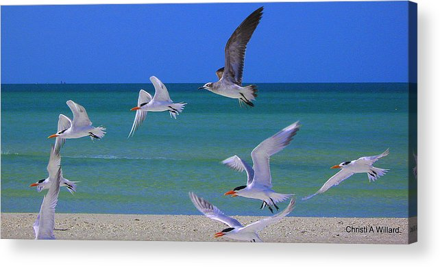 Birds Acrylic Print featuring the photograph Crashing The Party by Christi Willard