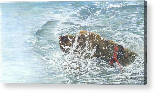 Animal Acrylic Print featuring the drawing Going For The Gold by Susan Moyer