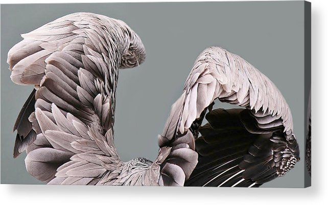 Wings Acrylic Print featuring the photograph Wings by Paulette Thomas