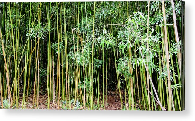 Bamboo Chimes Acrylic Print featuring the photograph Bamboo Chimes, Waimoku Falls Trail, Hana Maui Hawaii by Michael Bessler