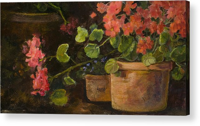 Flowers Acrylic Print featuring the painting Pots Of Geraniums by Jimmie Trotter