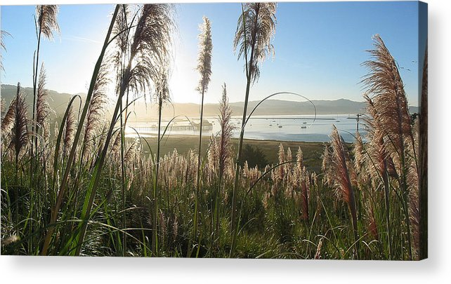 Harbor Acrylic Print featuring the photograph Princeton Harbor. California by Bob Bennett