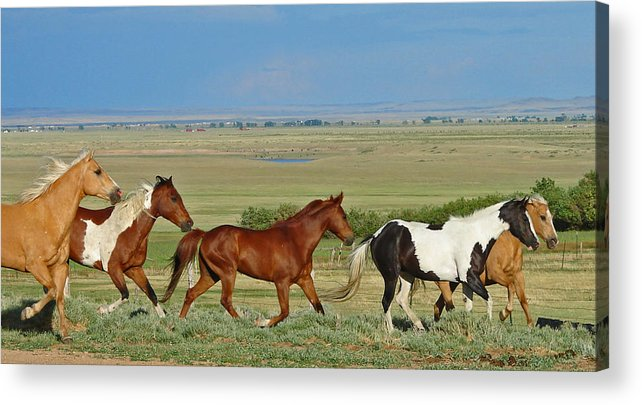 Herd Acrylic Print featuring the photograph Wild Horses Wyoming by Heather Coen