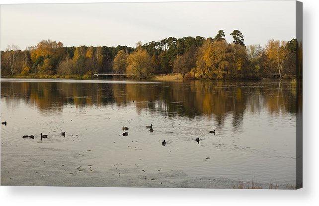 Autumn Acrylic Print featuring the photograph Ducks In The Pond by Vitaly Kozlovtsev