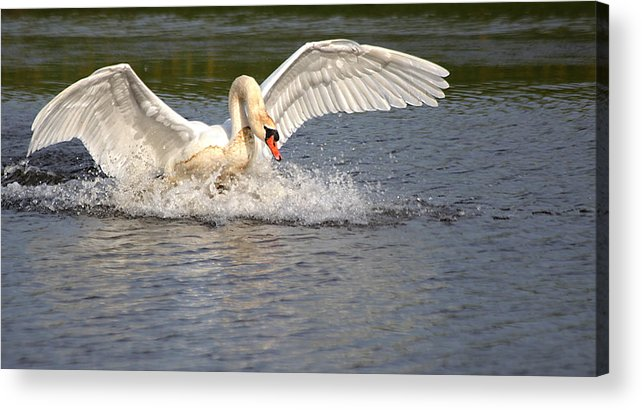 Nature Acrylic Print featuring the photograph Landing by Kent Mathiesen